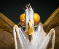 You won't believe these macro shots were taken with a smartphone